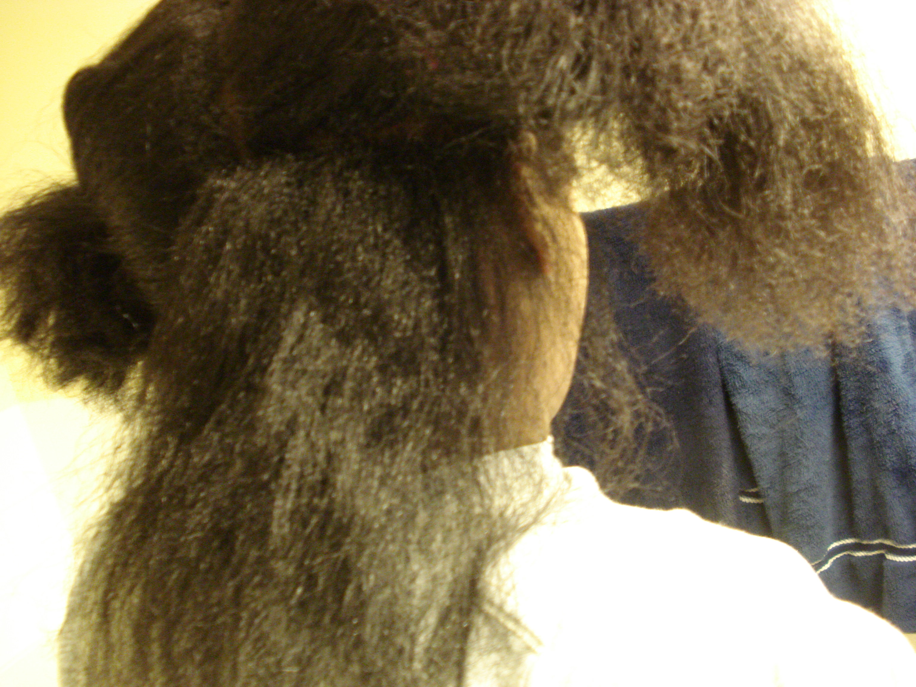 Steps To Seal Moisture In Natural Hair